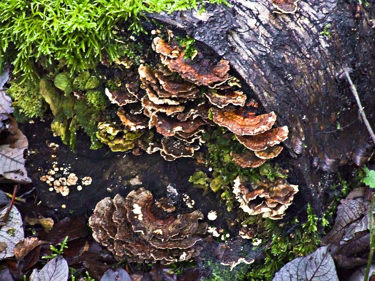 20201126-fungus-001.jpg