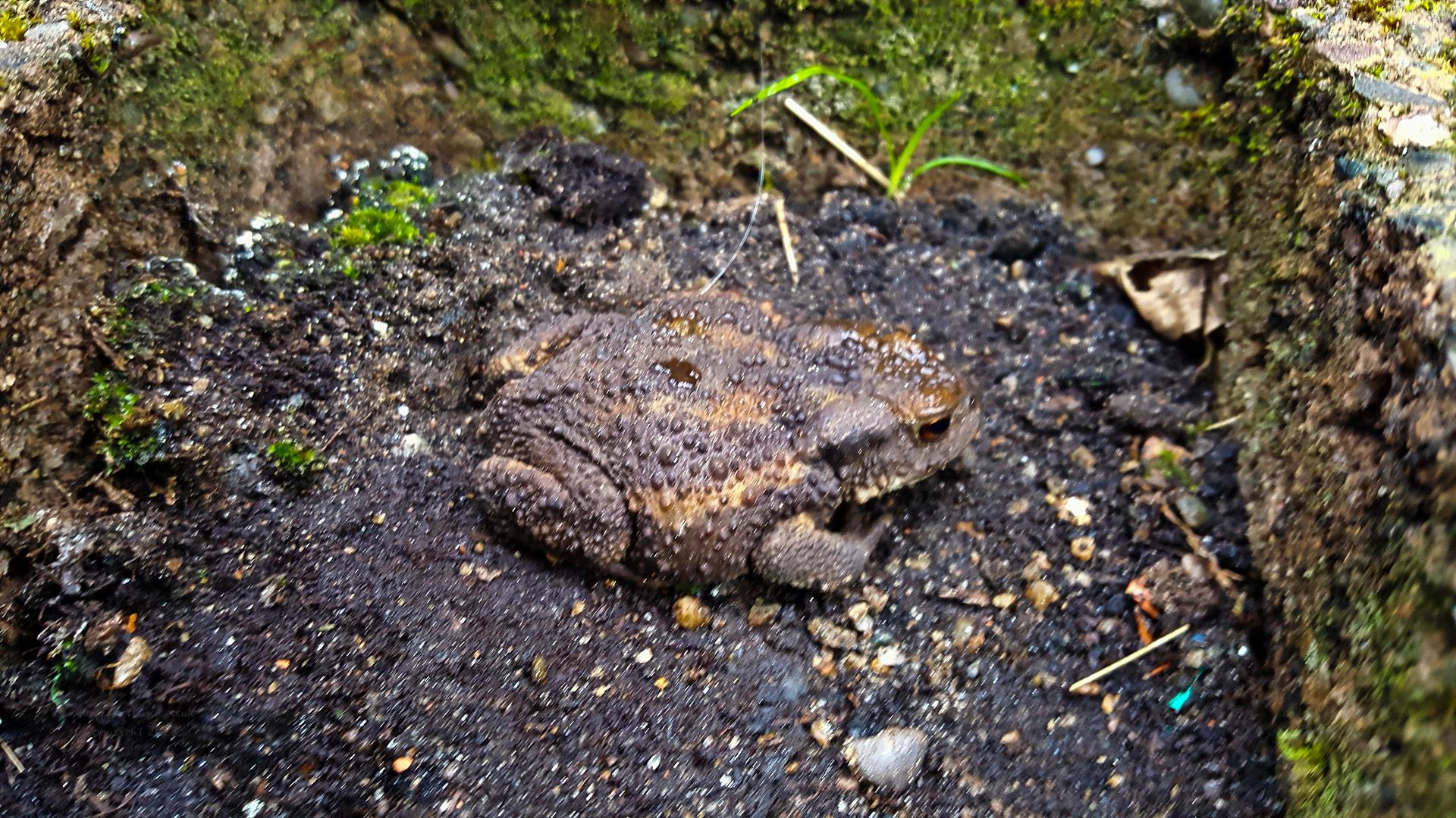 20210704-toad-002.jpg