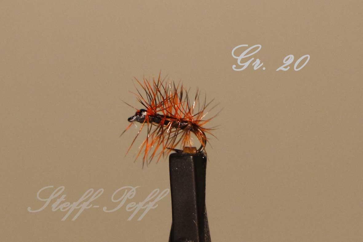 _MG_4063 Pupa Variante Gr 20.jpg