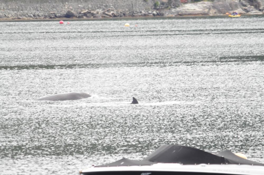 bottle-nose-whales-262.jpg