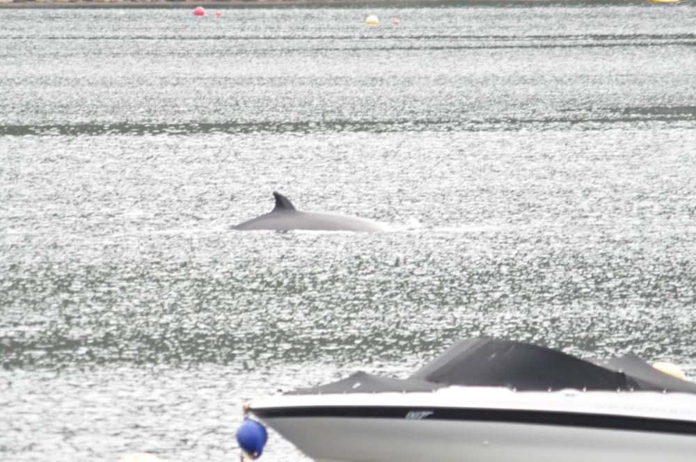 bottle-nose-whales-263.jpg