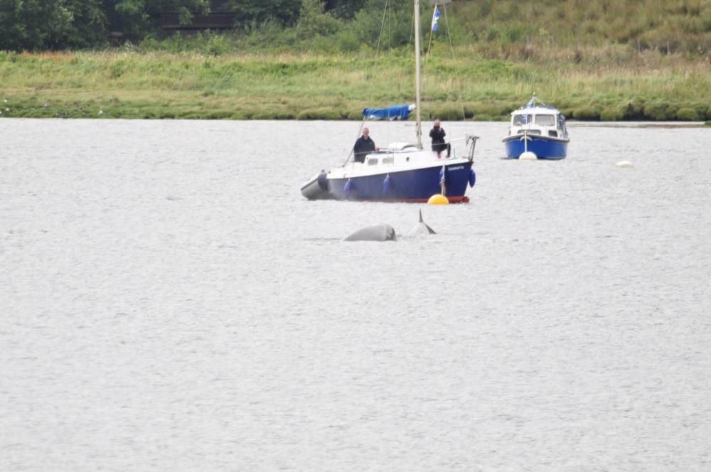 bottle-nose-whales-264.jpg